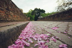 Fallen blossom (V Photography and Art) Tags: bridge pink trees brick floor blossom pavement low perspective ground palace pointofview fallen walls distance pinkblossom converginglines