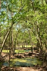 O'Leno Park, Florida (sabphotography97) Tags: fun spring florida hiking exploring fl sinkholes oleno alachuacounty lovefl hikingfl exploringfl