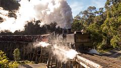 DSC04593.jpg (brianbronco) Tags: railway australia steam locomotive preserved belgrave garrat puffingbilly narrowguage trestlebridge g42