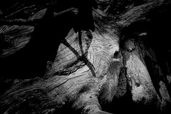 Elephant Tree Trunk B&W (Gary.Lamprecht) Tags: bw elephant abstract canon mississippiriver backwaters t6s tamron18270mm