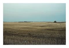 Plain Days. (Drew Amyot) Tags: drewamyot 2016 edmontonphotography canadianphotography nikonf4 svema125