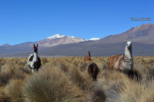 Frontera de Bolivia y Chile, Parque Nacional Sajama, Sajama, Oruro, Bolivia