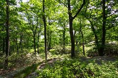 Serenity (kzoop) Tags: park trees newyork tree nature outdoor hiking hike bearmountain manual 12mm bearmountainstatepark samyang majorwelchtrail majorwelch