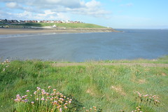 Whitmore Bay (Dave Roberts3) Tags: pink flowers sea beach water wales landscape seaside path vale thrift glamorgan barryisland coth supershot citrit