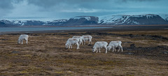 6 (41) (TallGrass-IA) Tags: snow nature norway lumix panasonic svalbard arctic micro g6 43 linblad 1235 expeditions mirrorless