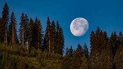 moon (bernd.kranabetter) Tags: mond himmel baum vollmond