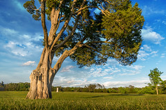 Manassas (cosmoguy1) Tags: tree texture clouds lens gold golden nikon long exposure angle dusk vibrant background wide clarity national hour manassas kit battlefield d5300
