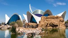 Oceanogrfic (rafa.esteve) Tags: espaa building valencia architecture aquarium spain 16x9