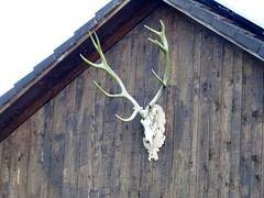 DSC03860 (Mr.J.Martin) Tags: tusslingbavaria bayren germany gapp garden canal village church wildflowers