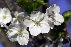 Springing out (P.Woolley) Tags: nature nikon massachusetts mass naturephotography birdpark walpolemass franciswilliambirdpark d3100 nikond3100