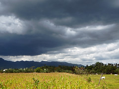 Philippines , landscape (STEHOUWER AND RECIO) Tags: travel vacation holiday mountains weather clouds rural landscape photography scenery asia view cows philippines agriculture filipinas quezon pilipinas luzon baka philippine bundok bananatrees filippijnen tiaong calabarzon