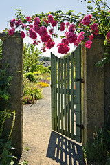 The Most Beautiful Garden Gates (HomeDecorMade) Tags: pink flowers roses summer plants plant flower home nature beautiful beauty rose wall yard garden landscape concrete wooden flora backyard gate open landscaping path over entrance front growth gateway bloom hanging flowering growing welcome blooms hang inviting welcoming blooming landscaped cultivated
