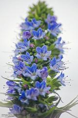 purple pretty small petals