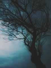 Dark Valley- Psalms 23 (Explore #20 02.05.2015) (roizroiz) Tags: tree composition interestingness explorer explore valley psalms yesterday today psalm composed i500 deathtree darkvalley photophotospicpicspicturepicturessnapshotartbeautifulflickrgoodpicofthedayphotoofthedaycolorallshotsexposurecompositionfocuscapturemoment