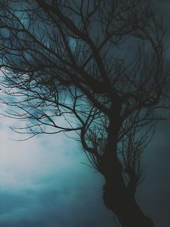 Dark Valley- Psalms 23 (Explore #20 02.05.2015)
