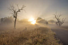 Sunrise through fog (Richard Sollorz Photography) Tags: morning autumn sun mist colour tree fog rural sunrise gum landscape dead outdoors photography golden farm side country australia nsw hue bathurst richardsollorz