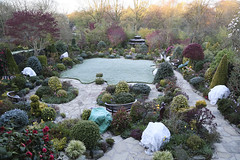 Garden air frost in mid spring (Four Seasons Garden) Tags: four seasons garden england english uk walsall colour foliage leaves spring 2016 flowers frost protection horticultural fleece air fost camellia tulip daffodil magnolia
