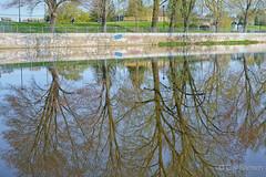 Le printemps dans la rivire / Spring in the river (guysamsonphoto) Tags: river spring rivire reflexion reflets printemps victoriaville victo rivireduqubec rivirenicolet guysamson sonyalpha7rmkii sonyfe50mmf18