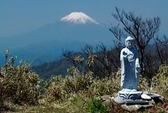 IMG_6804 (Nekogao) Tags: japan spring hiking worldheritagesite mountfuji  kanagawa  unescoworldheritage tanzawa mtfuji worldheritage    goldenweek      kanagawaprefecture  mttanzawa tanzawaoyamaquasinationalpark  mounttanzawa tanzawarange