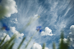 Clouds #157/365 (A. Aleksandraviius) Tags: blue summer sky field clouds nikon wind 20mm 365 nikkor lithuania cornflowers project365 365days nikkor20mm d810 nikon20mm 157365 nikond810 f18g 365one nikon20mm18g 20mmf18g afdnikkor20mmf18ged 3652016