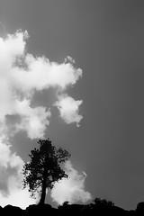 Kissed by shadows (Howard Sandford) Tags: shadow sky blackandwhite bw cloud tree nature monochrome silhouette calm yosemite stillness