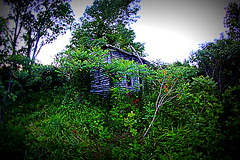 1860's Cabin (Mary America) Tags: light usa abandoned ancient kentucky country homestead manandnature kentuckyfarm