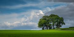 #The_Green (Eric Goncalves) Tags: green nature beautiful spring gloucestershire nikond810 ericgoncalves nikon24120f14vr