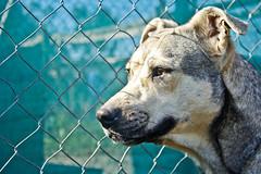 Refugio Esperanza (valentinadiazfotografia) Tags: dog refugio mejoramigo adoptanocompres