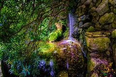 Hidden Fall (GlennPope) Tags: tree water rock stone austin outside us waterfall pond texas unitedstates path fisheye serene hdr zilkerbotanicalgardens lenstagger