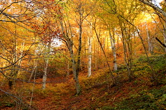 (Jelena1) Tags: autumn trees naturaleza mountain tree hoja nature berg leaves forest montagne automne canon landscape leaf tara serbia herbst natur paisaje blad list bosque skog rbol otoo balkans montaa paysage blatt landschaft wald arbre priroda baum fort hst trd feuille landskap srbija drvo jesen planina uma lisce taramountain drvece canonefs1855mmf3556is canon600d planinatara westernserbia zapadnasrbija canoneos600d autumninserbia