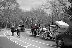 DSC00107 (ricklin photos) Tags: nyc winter newyork zeiss centralpark sony sonya7