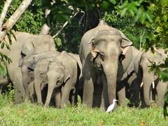 Happy family - Khao Yai National Park, Thailand (ashabot) Tags: travel family thailand happy seasia happiness elephants nationalparks happydays elephantsanctuaries