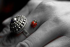 """Lady Bug • <a style=""""font-size:0.8em;"""" href=""""http://www.flickr.com/photos/54083256@N04/17045348921/"""" target=""""_blank"""">View on Flickr</a>"""