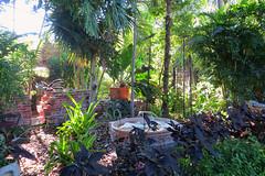 Key West (Florida) Trip, November 2014 3181Ri 4x6 (edgarandron - Busy!) Tags: keys florida keywest floridakeys higgsbeach westmartellotower keywestgardenclub
