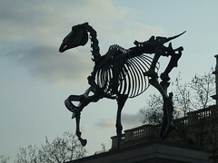 Horse Sculpture, Trafalgar Square, London (Julie Rutherford1) Tags: horse skeleton hans haacke horsesculpture