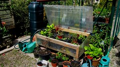 Hand made cold frame