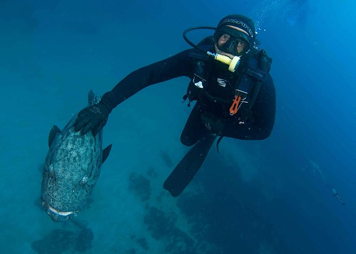Umkomaas diving
