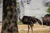 IMG_07831 (Bdglr) Tags: paris france zoo îledefrance fr cou vincennes tordu parczoologique