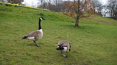 Sefton Park, Liverpool. April 2016. (amberleckenby) Tags: park nature birds liverpool wildlife sefton