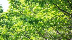 201605_07_2560 (noriko_v) Tags: green spring