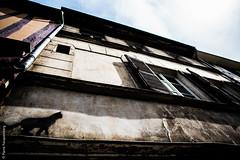 "Faade ""chat"" - Rouen (Pierre Fauquemberg) Tags: rouen histoire normandie maison mur faade patrimoine historique colombages vieilleville mdival hautenormandie pierrefauquemberg"