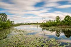 _MCG7062 (mgarin73) Tags: longexposure nature us unitedstates michigan preserve crosswindsmarsh 10stopfilter brownstownchartertownship crosswindsmarshwetlandinterpretivepreserve