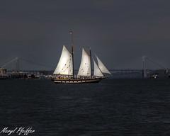 sailboat01 (meryl.pfeiffer) Tags: nyc sailboat sailing hudson gwb georgewashingtonbridge nyharbor