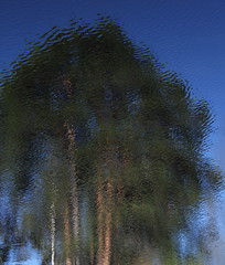 IMG_4366 (birgittaberggren) Tags: ljus fotosondag fs160522