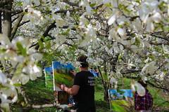(colorinspirit) Tags: inspiration art garden painting botanical spring blossom atmosphere sunny ukraine artists bloom magnolia capture kiev kyiv painters openair tuliptree