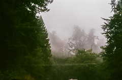 45470003 (danimyths) Tags: california trees mist film fog forest coast roadtrip pch redwood westcoast californiacoast filmphotography pacificcostalhighway