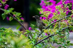 Bird (grey012) Tags: bird nikon natural 3100 d3100 nikond3100