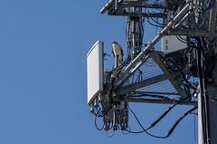Internet Provider (brev99) Tags: bird metal hawk bluesky wires satellitetower d7100 nikviveza tamron70300vc highqualityanimals