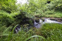 Lynn Glen (Rossco156433) Tags: nature water beautiful river landscape outdoors scotland waterfall glen burn dalry ayrshire lynnglen northayrshire