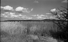 Experiment point &shoot (salparadise666) Tags: voigtlnder avus 6x9 fomapan 100 caffenol rs nature landscape hannover bw sw niedersachsen germany compur shutter rollex patent filmholder